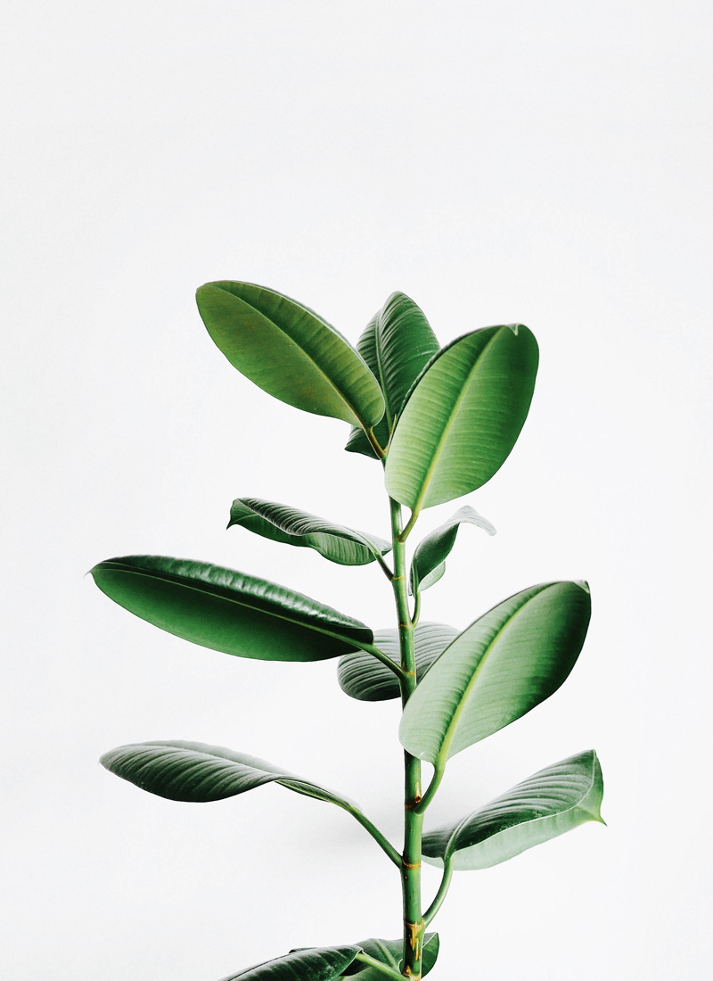 (5) astuces beauté green en voyage