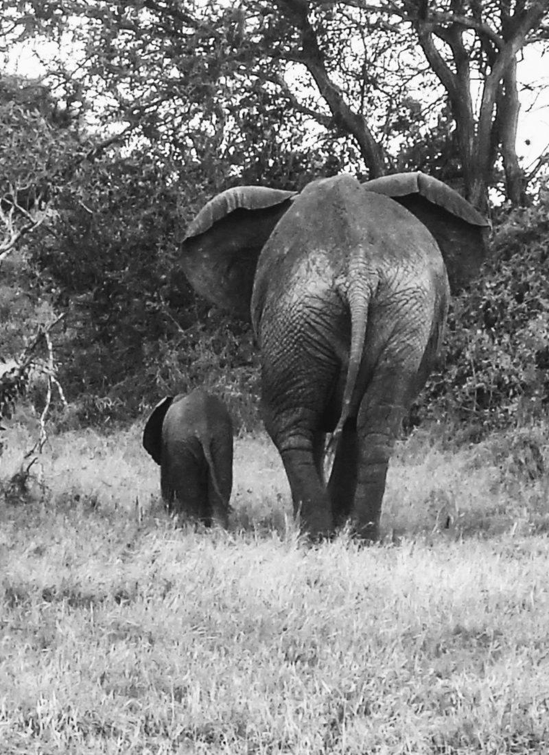 Souvenirs d'un safari au Kenya